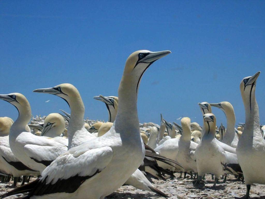 Many birds gathered on an island