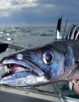 Close up of caught fish